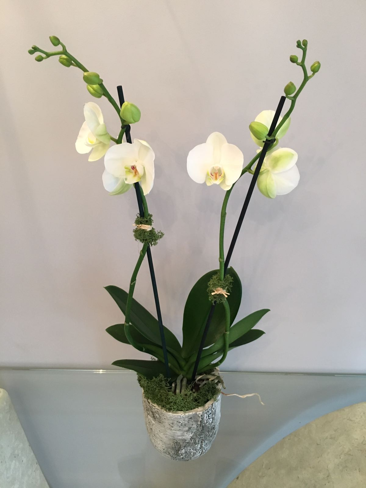 Orchid bouquet lucy